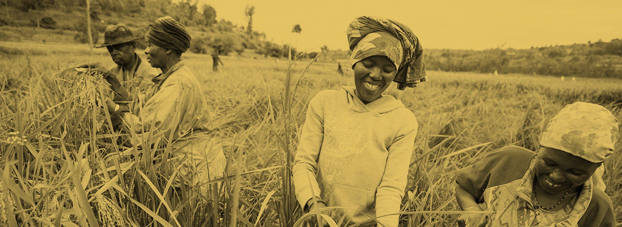 Agriculture Focus